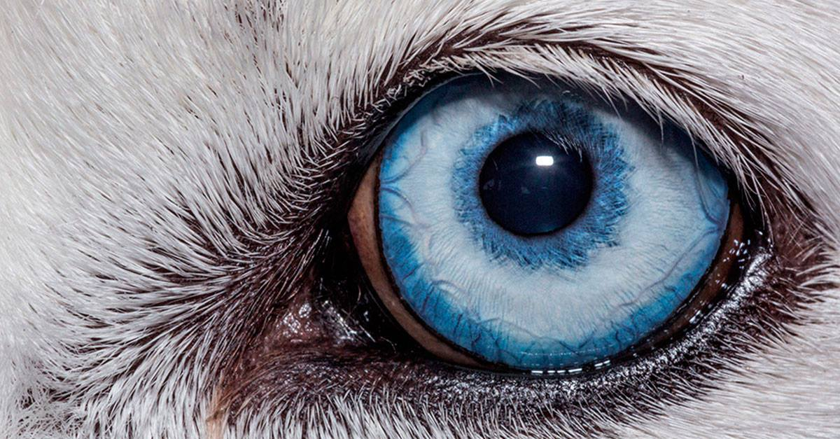 Yeux d'animaux macro